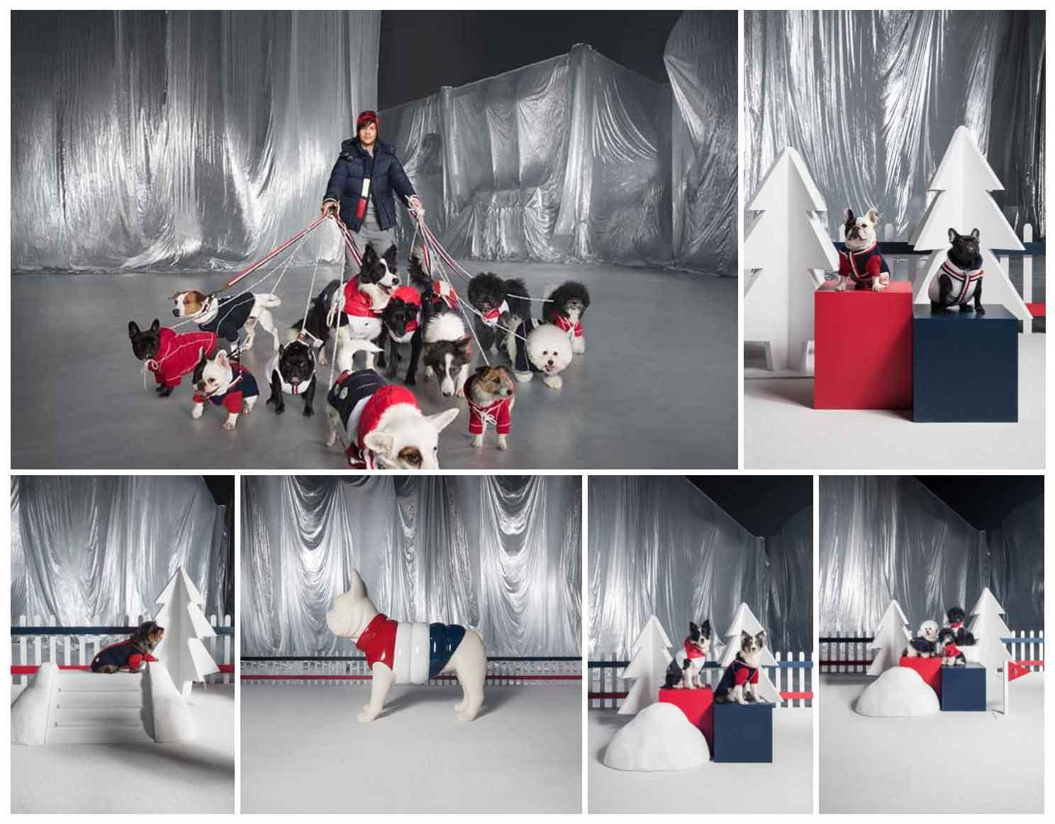 15717e98f Fuffy al calduccio con la nuova linea per cani Moncler Poldo Dog Couture